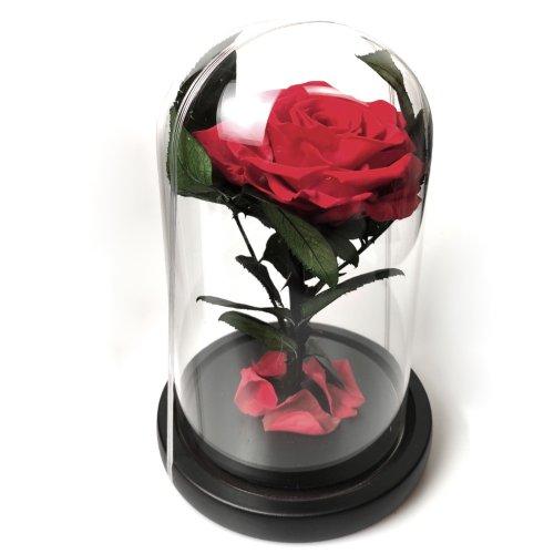 Cupola cu trandafir criogenat, in cutie eleganta de cadou