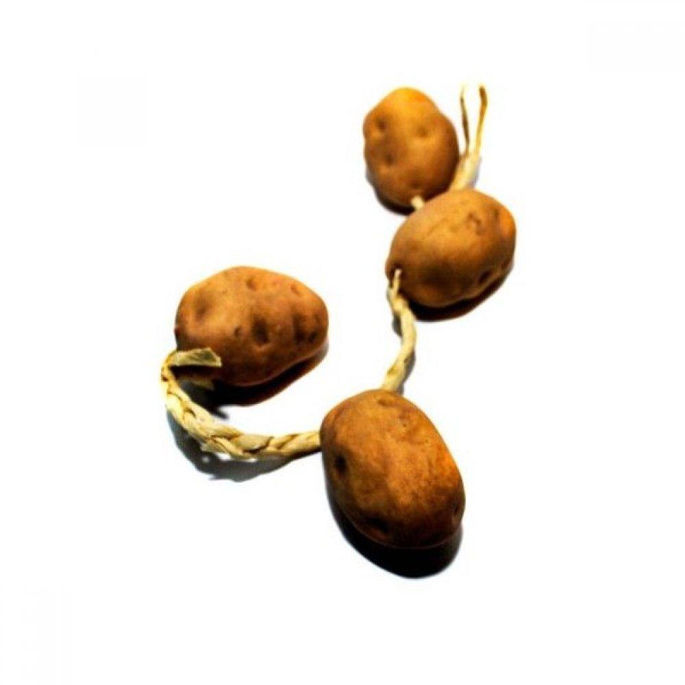 Funii Artificiale Cartof
